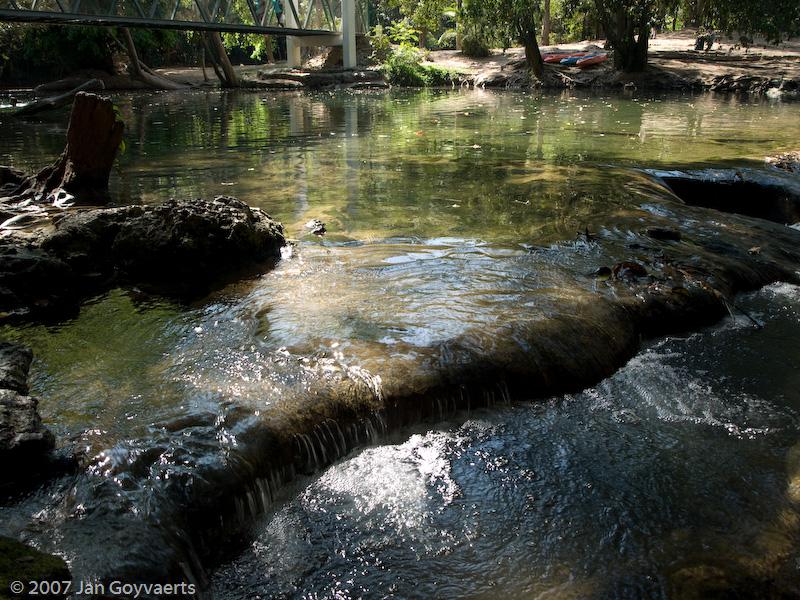 Forest river glistening in the sun